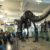 Things to do with kids: Hidden NY: 5 Fun Finds at the American Museum of Natural History