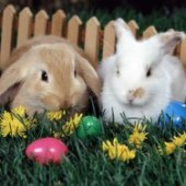 Things to do with kids: Egg Hunts and Bunny Fun on Easter Weekend for LA and OC Kids
