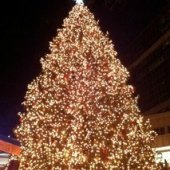 Things to do with kids: Holiday Tree Lightings in Boston