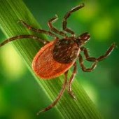 Things to do with kids: May is Lyme Disease Awareness Month