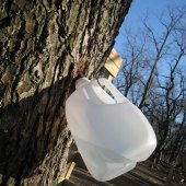 Things to do with kids: Maple Sugaring on Long Island 2015