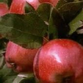 Things to do with kids: Pick Your Own Apple Farms For Families On Long Island