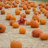 Things to do with kids: Pumpkin Patches, Hay Rides and Fall Fun in Fairfield County