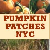 Things to do with kids: Pumpkin Patches Near NYC Where Kids Can Pick Their Own