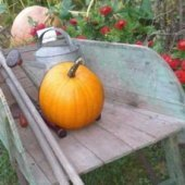 Things to do with kids: Pumpkin Picking Farms & Corn Mazes On Long Island