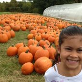 Things to do with kids: Pumpkin Patches: Where to Go Pumpkin Picking in Westchester & Hudson Valley