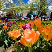 Things to do with kids: Spring Festivals on Long Island 2015