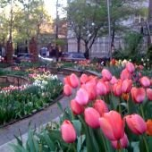 Things to do with kids: Spring Flowers in Bloom: Visit New York City's Gardens