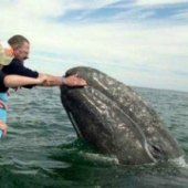 Things to do with kids: Where To Go Whale Watching with Kids in LA