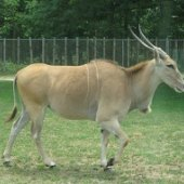 Things to do with kids: Wild Safari at Six Flags: Drive-Through Animal Fun for Families Near NYC