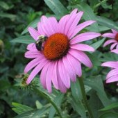 Things to do with kids: Summer Fun at the New York Botanical Garden for NYC Kids