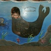 Things to do with kids: Jenkinson's Aquarium: An NJ Favorite