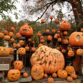 Things to do with kids: Fall New England Pumpkin Festivals for Families