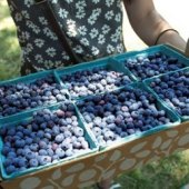 Things to do with kids: Weekend Fun for Philly Kids: Blueberries, Trains, Fiesta July 11-12