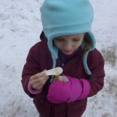 Things to do with kids: Maple Sugar Festivals and Farms for Boston Families
