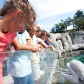 Things to do with kids: Summer Day Trips for Long Island Families