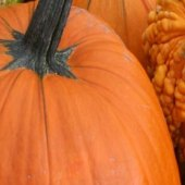 Things to do with kids: Top Pumpkin Picking Farms for Families in New Jersey