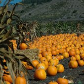 Things to do with kids: Birthday Parties at Pumpkin Farms in New Jersey