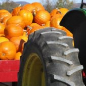 Things to do with kids: The Best Pumpkin Picking for Families in The Philly Area