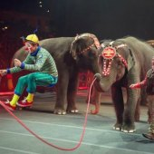 Things to do with kids: Weekend Fun with LA Kids: Circus Xtreme, Old Fort MacArthur, and Free Slurpees , July 11 - 12