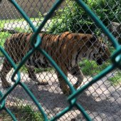 Things to do with kids: New Jersey Zoos and Aquariums: Popcorn Park Zoo