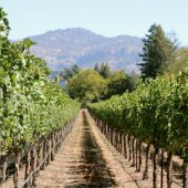 Things to do with kids: Napa Valley Weekend Getaway: Family Friendly Wineries and Delectable Eats