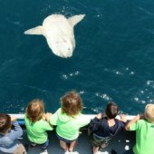 Things to do with kids: Best Things To Do This Weekend with LA Kids:  Whales, Purim, and Zimmerpalooza Mar 7 - 8